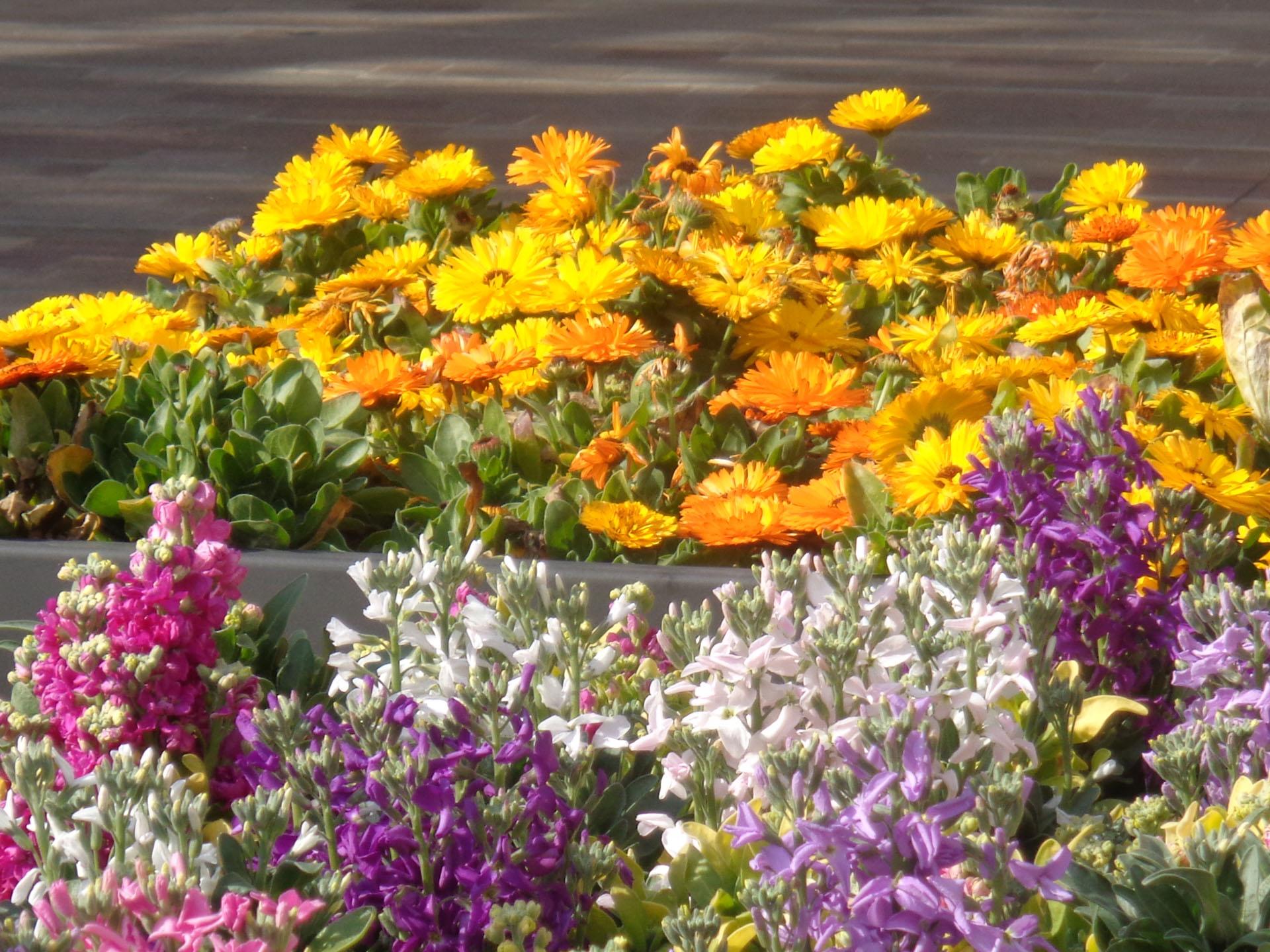 Bolzano festa dei fiori